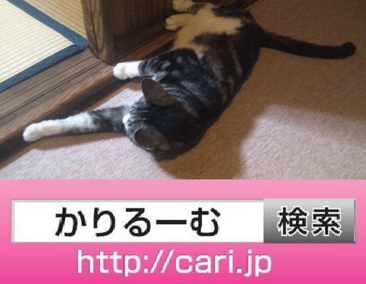 2016/08/13(19:08:47) 猫S ごろごろ