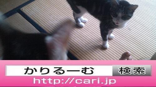 2016/08/10(13:39:56) 写真 畳に猫二匹