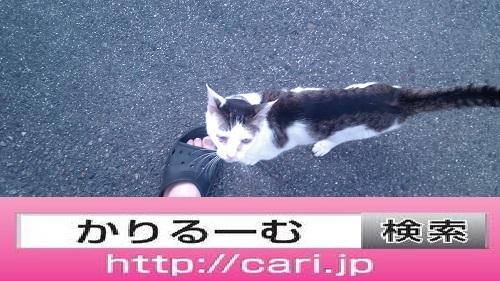 2016/08/10(14:14:36)写真 猫見上げる