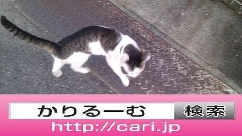 2016/08/10(13:43:52) 写真 猫H