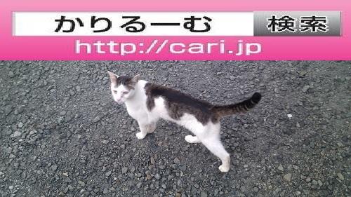 2016/08/10(14:17:14)写真 猫H