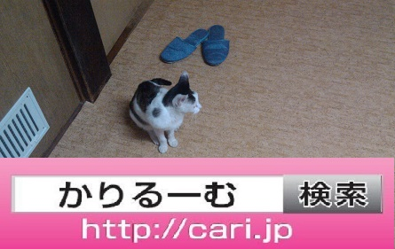 2016/08/30(13:51:10)写真 猫とスリッパ