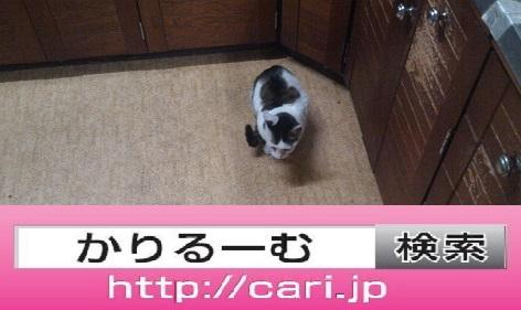 2016/08/30(13:54:48)写真 猫H