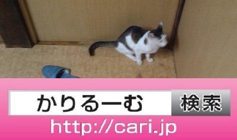 2016/08/30(14:02:16)写真 猫H