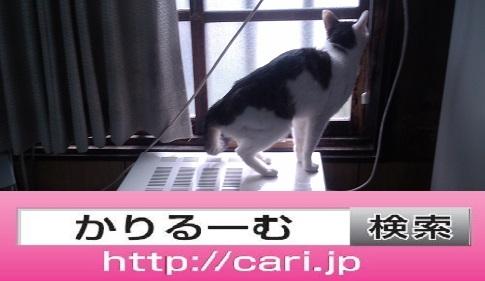 2016/08/27(13:46:50)写真 猫H