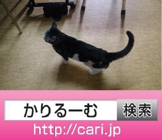 2016/09/29(09:33:03) 猫S