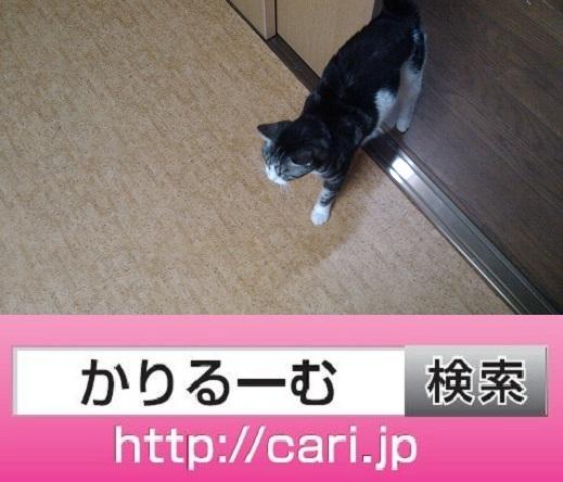 2016/09下旬・歴史・160921170325猫S写真
