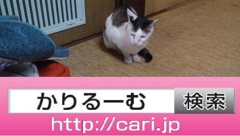 2016/08/31(14:09:26)写真 猫H