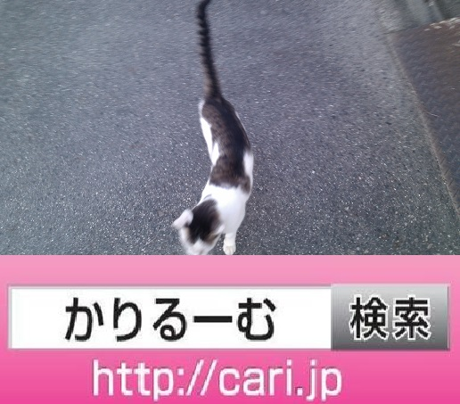 2016/08/10(17:16:25)写真 猫H