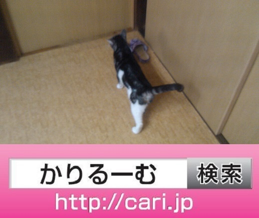 2016/09/25(12:55:23)写真 猫S