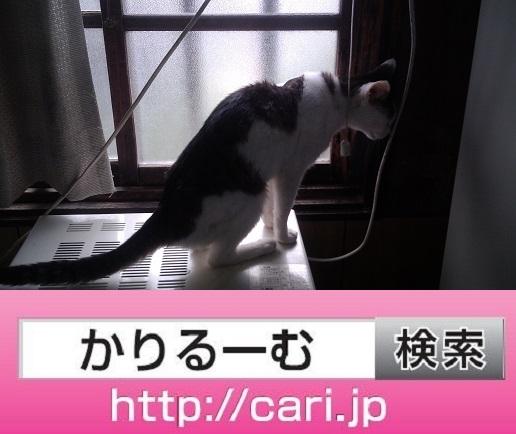 2016/08/27(11:42:16)写真 猫H