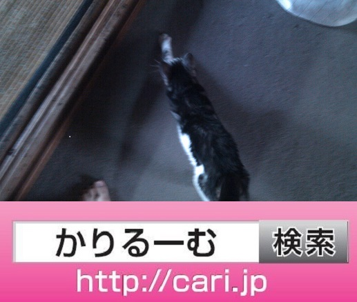 2016/08/29(15:14:58)写真 猫S