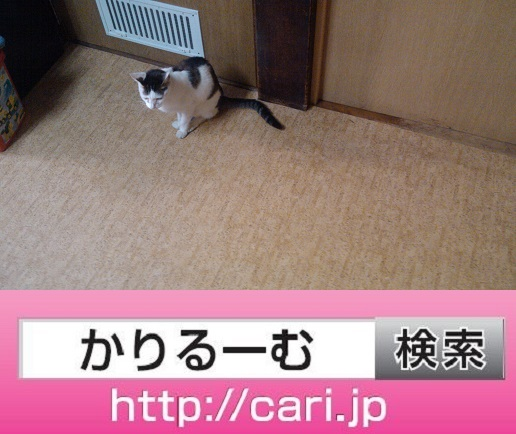 2016/08/31(16:53:21)写真 猫H