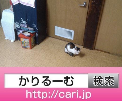 2016/09/15(16:45:34)写真 猫H