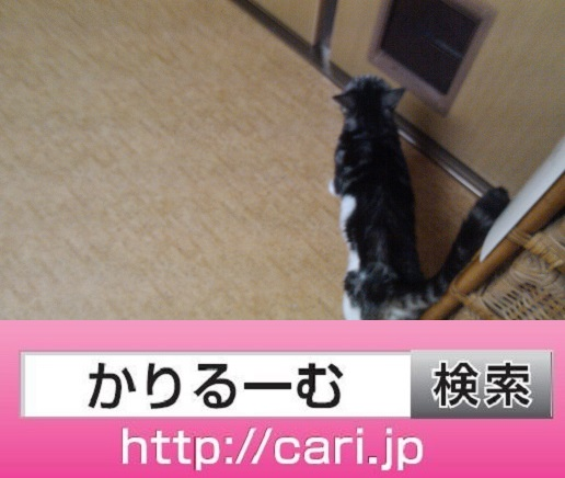 2016/09/19(16:52:59)写真 猫S