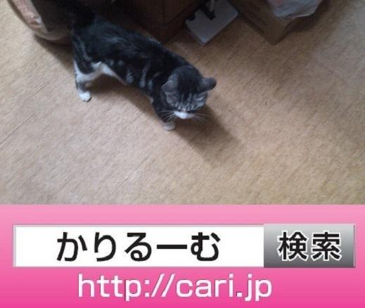 2016/09/13(17:35:10)写真 猫S