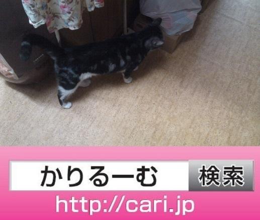2016/09/13(17:36:05)写真 猫S