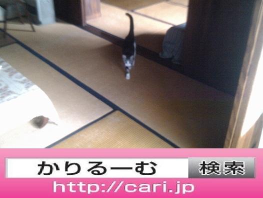 2016/09/11(10:04:403) 猫S写真 民家屋内畳部屋