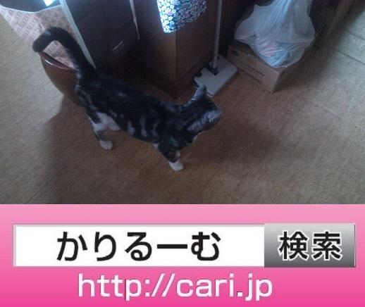 2016/09/25(12:54:56)写真 猫S