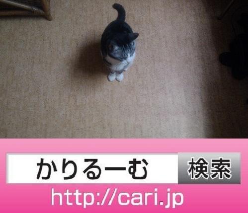 2016/10/17(17:50:37)写真 猫S
