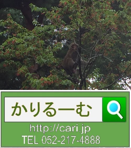 2017/08/14(15:25:00)M撮影写真 野生猿