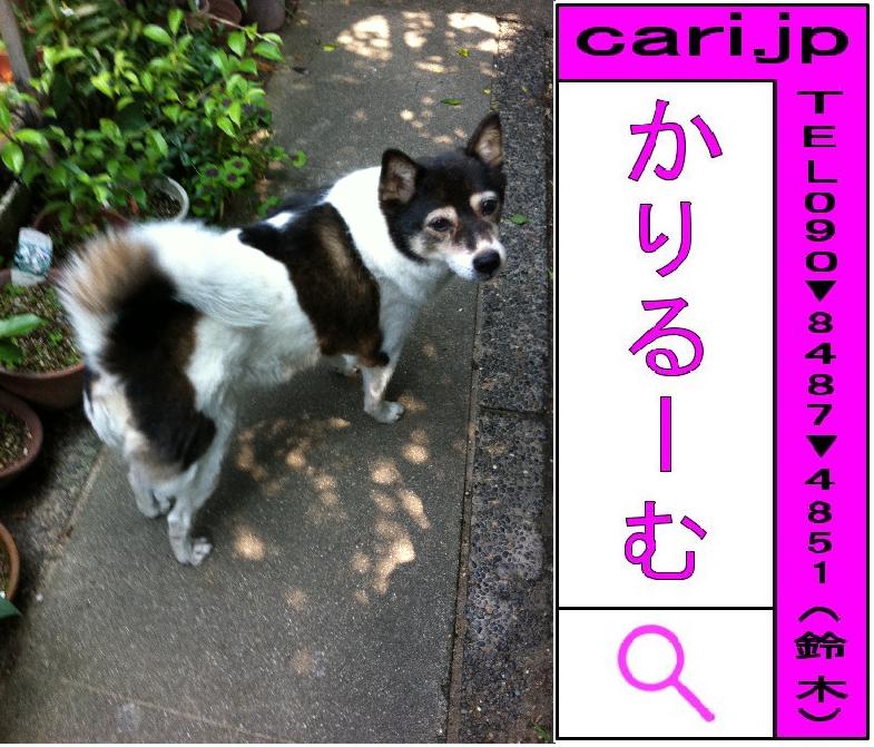 2011年06月04日(10時11分)A撮影写真 犬M