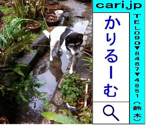 2012/01/21撮影写真  犬モモ