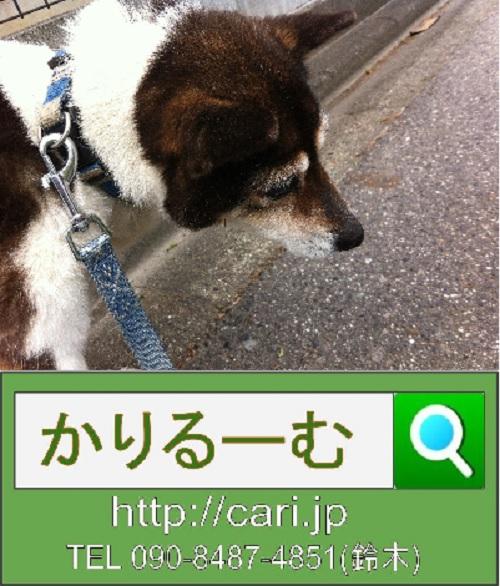 2012/05/17(12:07) 撮影写真 雌犬モモ