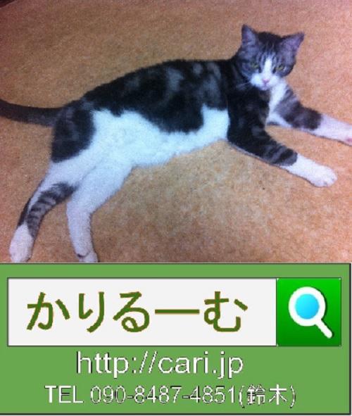 2015/06/13(12:29)撮影写真 猫S