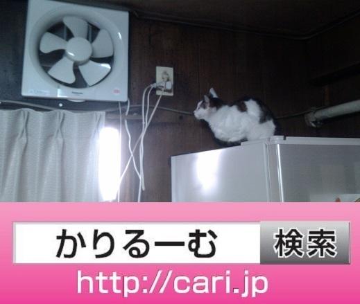 2016/09/17(13:36:30) 猫Hの写真