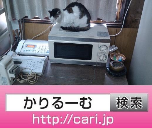 2016/09/17(13:35:37)写真 猫H