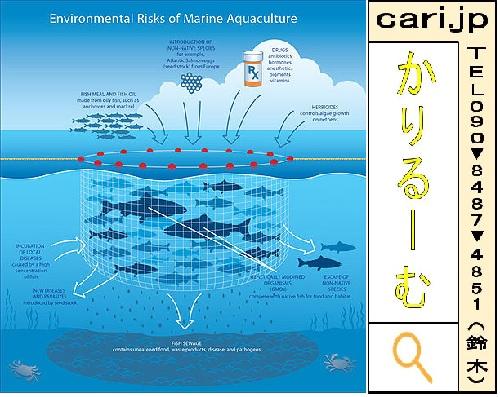 水の畜産施設、養殖が魚にも環境にも良くない理由