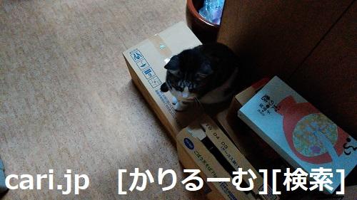 2018/12/04写真 猫スズ(すず)段ボールに座っている