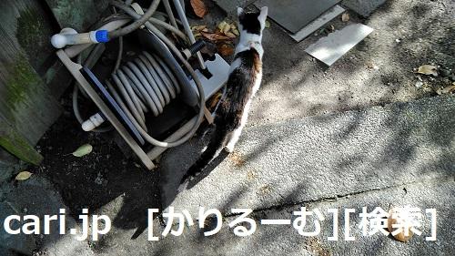 2018/12/09 猫ハナ(はな)写真 KIMG0251