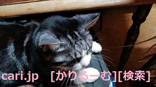 2018/12/01猫スズ(すず)の写真1812011920