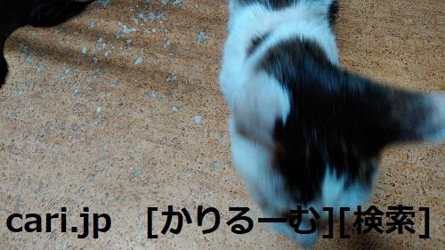 2018/12/01猫ハナ(はな)の写真1812011944