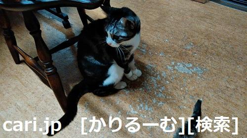 2018/12/01猫スズ(すず)の写真1812011944